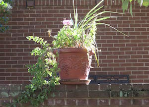 Fountain Manor Flower Container